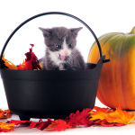 Fall cat in basket