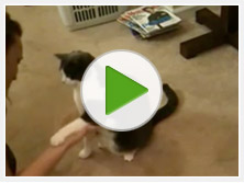 cat-tricks-video