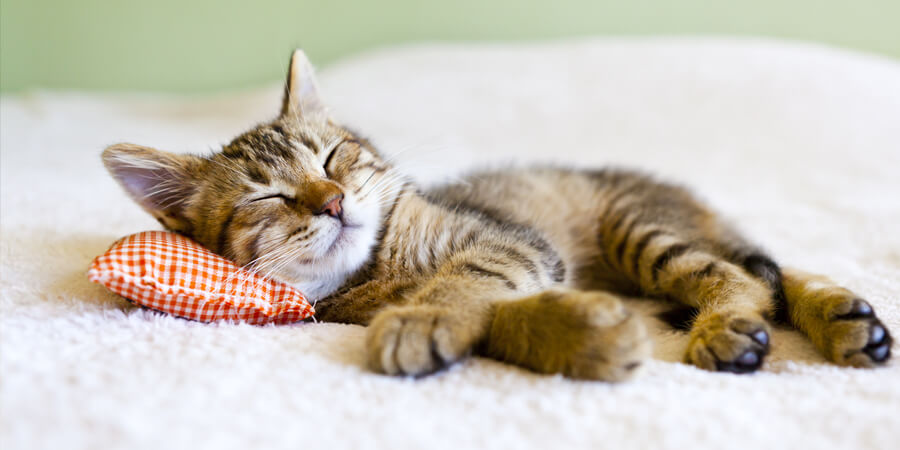 10 Ways to Keep your Cat Happy and Healthy