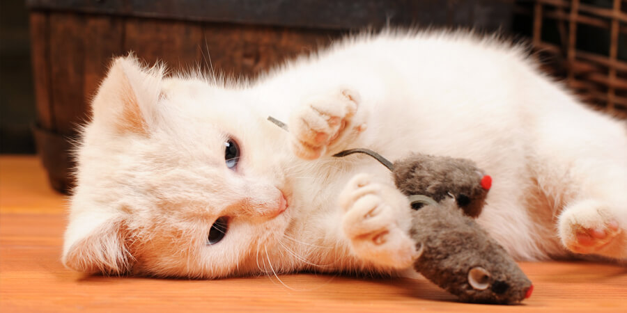 The 10 Best Homemade Cat Toys
