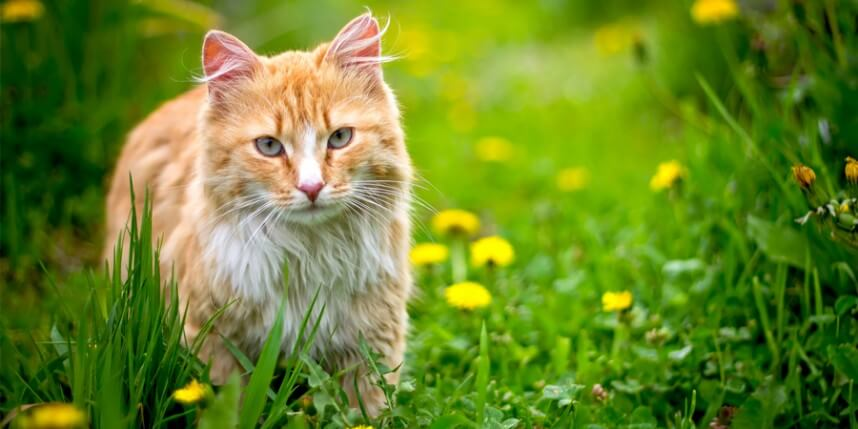 7 Ways to Keep Your Outdoor Cat Safe