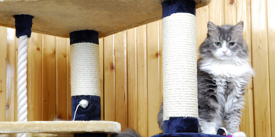 How to Create a Cat-Friendly Room in Your House