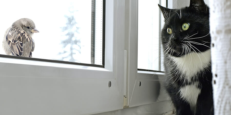 3 Tips for Keeping Your Single Cat Happy