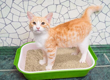 Jackson Galaxy on the Benefits of Natural Cat Litter