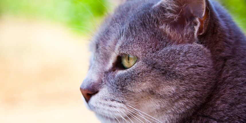 Dealing With The Two Most Common Diseases in Older Cats