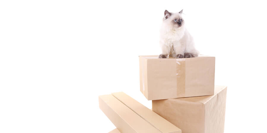 How to Survive Moving Houses With a Cat