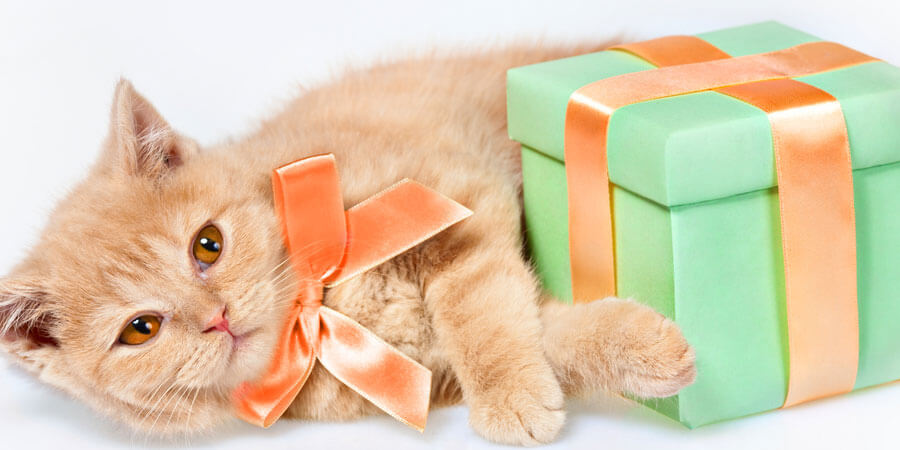 6 Cute Ideas for a Cat's Birthday Party