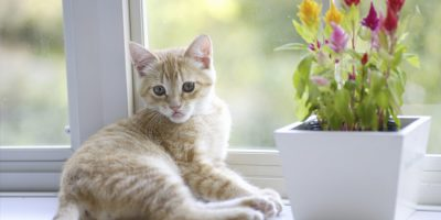 5 Tips for a Clean, Cat-Friendly Home This Spring