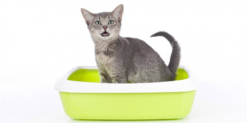 4 Tips to Save Time and Money on Cat Litter