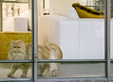 Four Ways to Build a Cat-Friendly Home