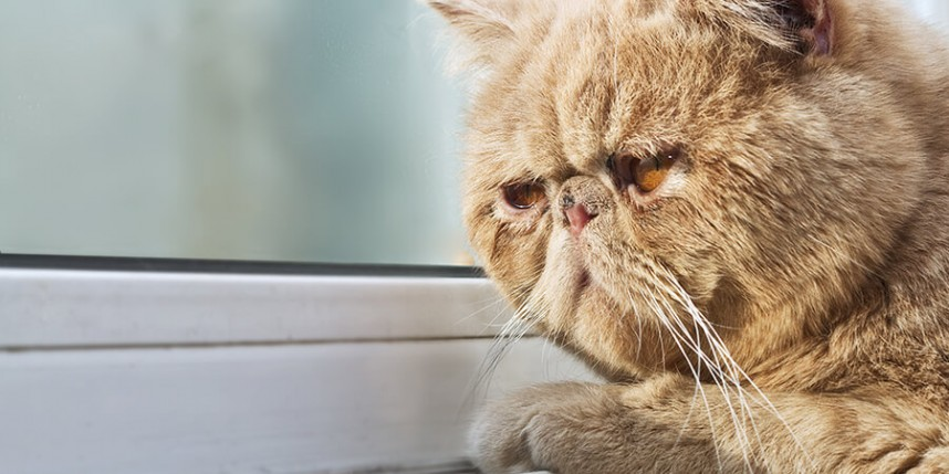 How To Cheer Up A Sad Cat