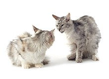 How to Solve Aggressive Cat Behavior