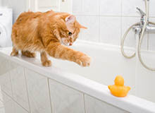 How (and When) to Give a Cat a Bath