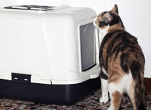 Should You Get a Self-Cleaning Litter Box?