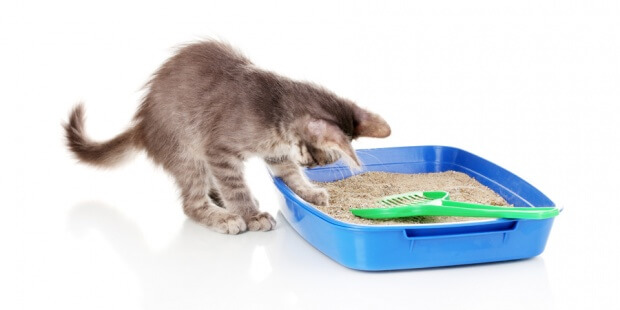 How Much Cat Litter Should You Use