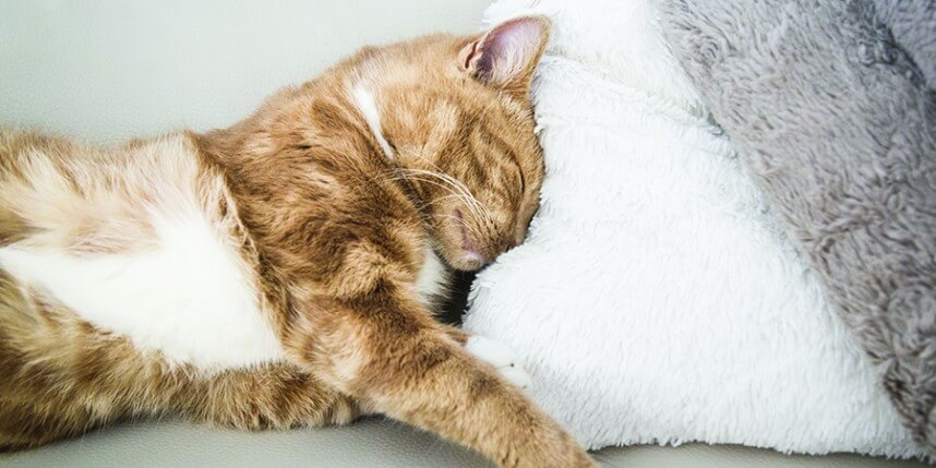 Five Ways To Get Rid Of Cat Fleas Naturally World S Best Litter Blog Clearing The Air