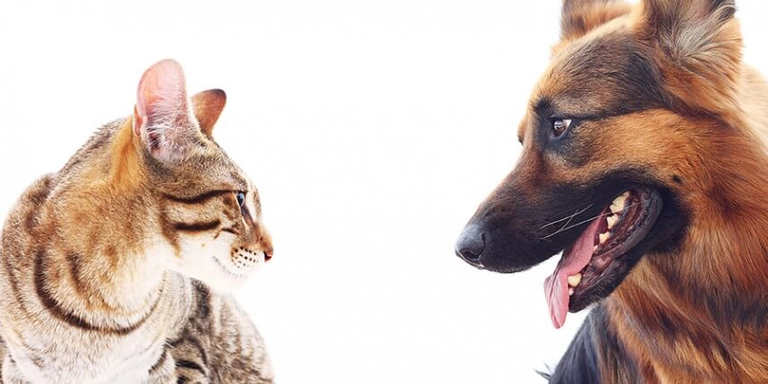 Introducing Your Cat to a New Dog: A Step-by-Step Guide