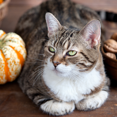 Make Holiday Parties Less Stressful for Your Cat