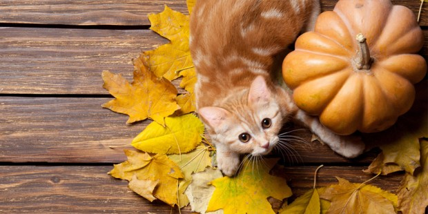 4 Fun Ways to Say Happy Thanksgiving to Your Cat