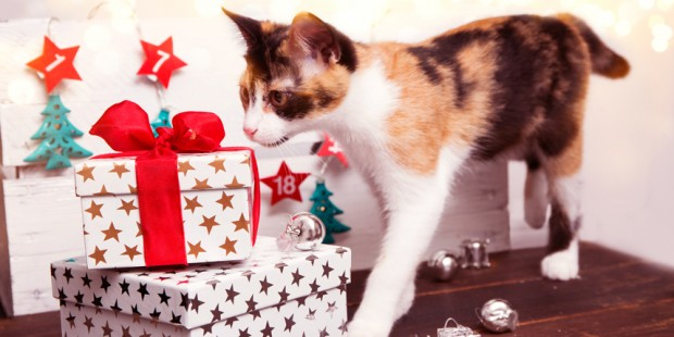 5 Most Useful Gifts for Cat Lovers