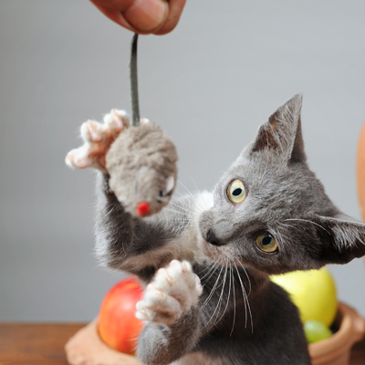 Useful Gifts for Cat Lovers
