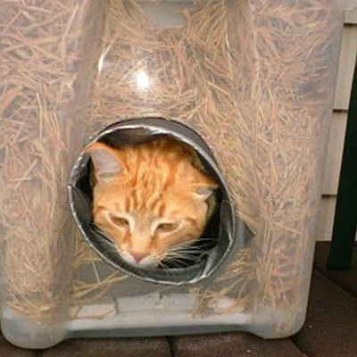 Super-cozy, super-easy DIY cat shelter