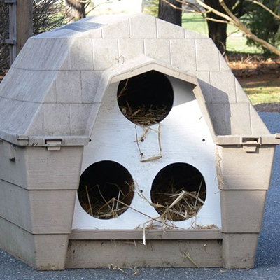 Converted doghouse