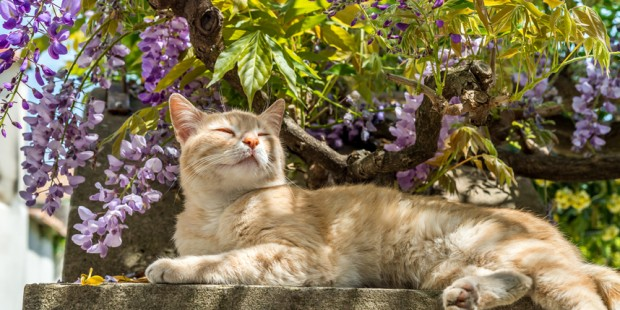 Spring Gardening Tips for Cat Owners