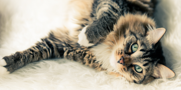 Are You April Fool Proof World S Best Cat Litter Blog