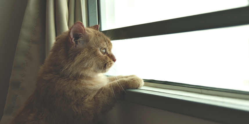One is the Loneliest Number. If You're a Cat.