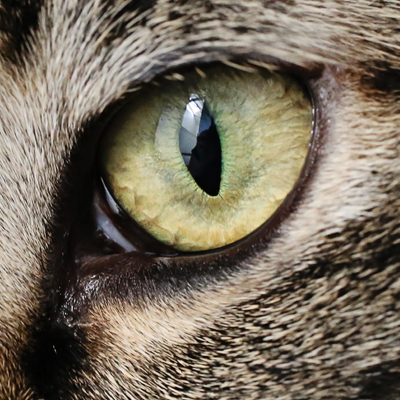 Most cats don't have eyelashes
