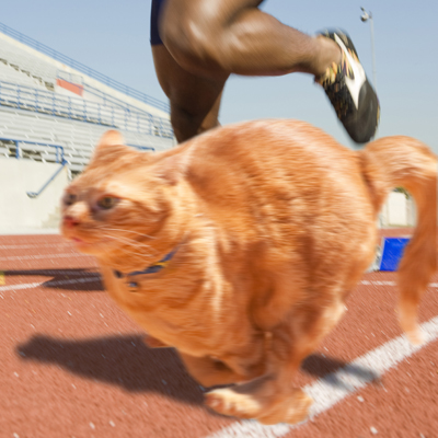 House cats are faster than Usain Bolt