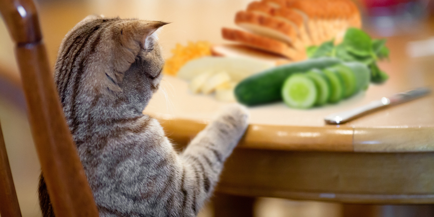 Human Food for Cats: A Basic Guide