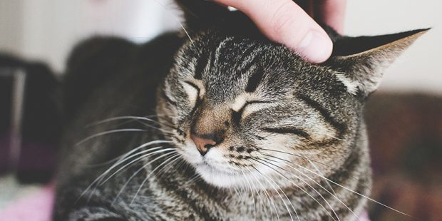 How Do Cats Show Affection?