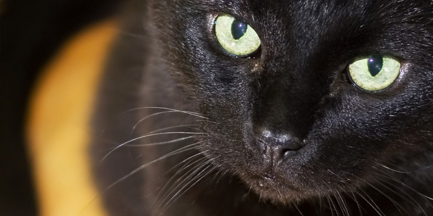 Black Cat Myths, Legends and Truths