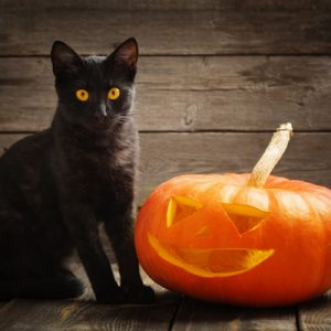 Why are Black Cats Associated with Magic and Halloween?