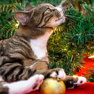 Try to create a cat-proof Christmas tree
