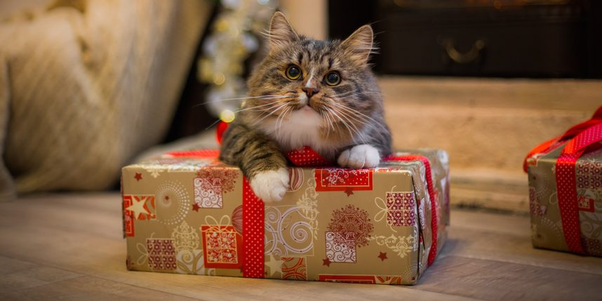 6 Ways to Help Your Cat Cope With Holiday Stress