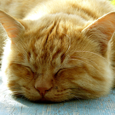 Cats experience both REM and Non-REM sleep