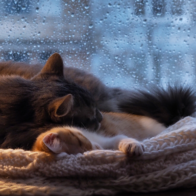 Weather affects cats' sleeping habits