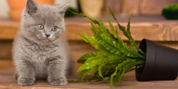 6 Foods You Should Never Feed Your Cat