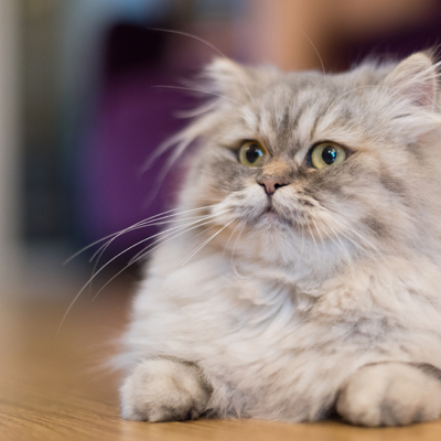 Senior and special needs cats may be a better alternative to a kitten
