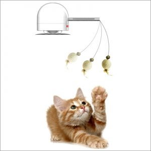 cat playing with hanging toy