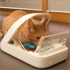 orange cat eating from an automatic feeder