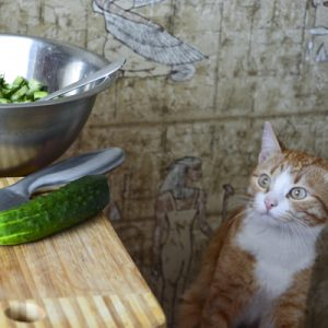 cat starring at a cucumber on a table top