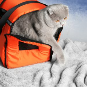 gray cat stepping out of orange travel carrier onto bed