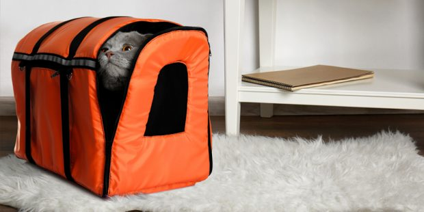 gray cat in orange travel carrier