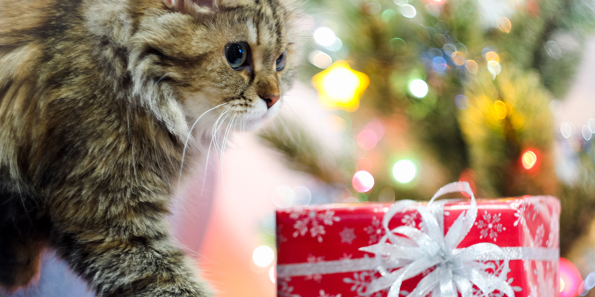 cat with holiday gift