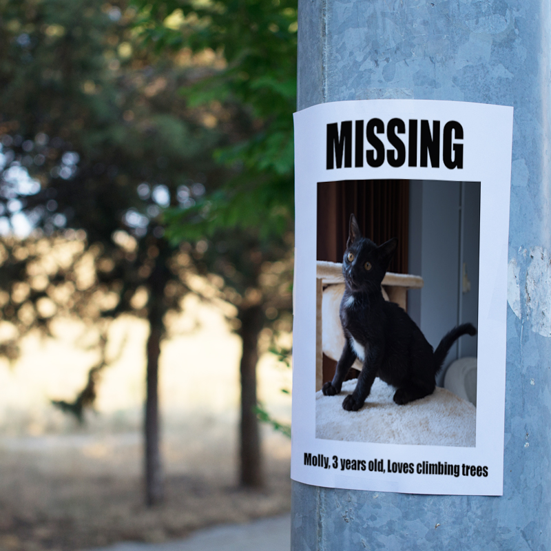 missing cat poster on post
