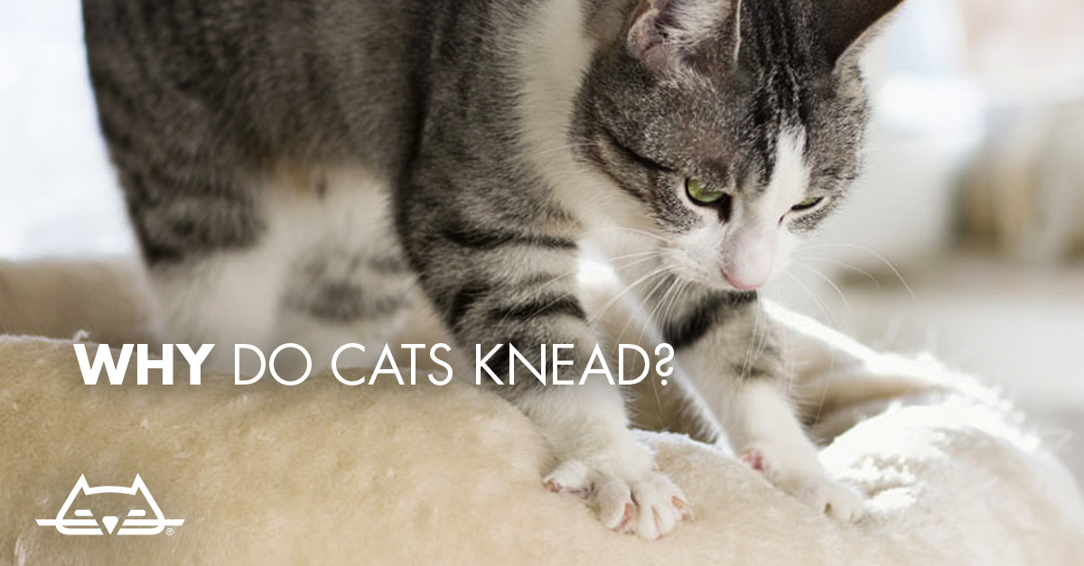 where do domestic cats come from